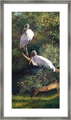 Juvenile Woodstorks Framed Print by Laurie Hein