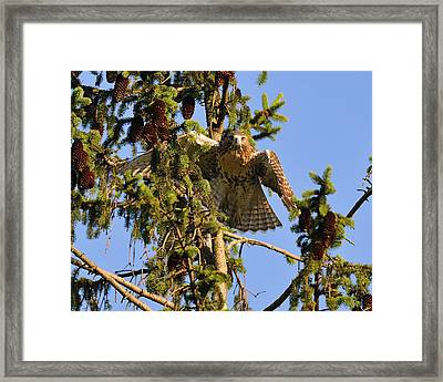 Juvy  Framed Print by Angel Cher