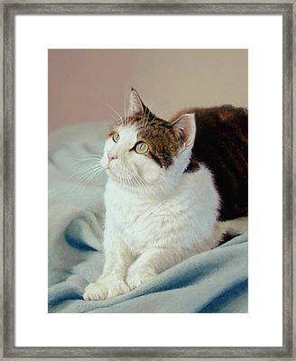 K C  Kitty Cat Framed Print by Barbara Groff