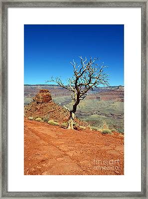 Kaibab Trail Tree And Cap Rock Formation Grand Canyon National Park Framed Print by Shawn O'Brien