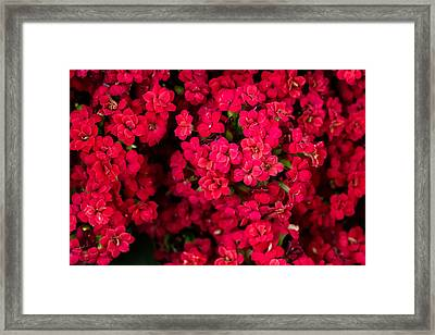 Kalanchoe Up Close And Personal Framed Print by Eti Reid