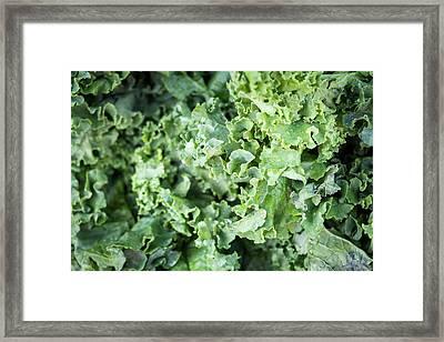 Kale For Sale At A Farmer's Market Framed Print by Julien Mcroberts