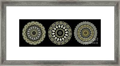 Kaleidoscope Ernst Haeckl Sea Life Series Steampunk Feel Triptyc Framed Print by Amy Cicconi