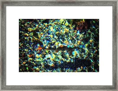 Kaleidoscope Framed Print by Rick Furmanek