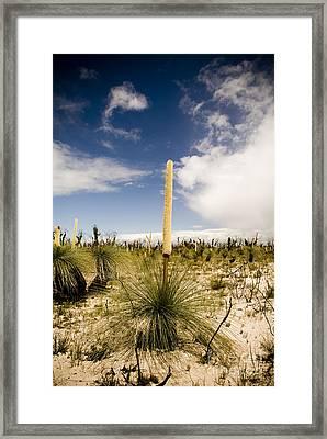 Kangaroo Tail Framed Print by Tim Hester