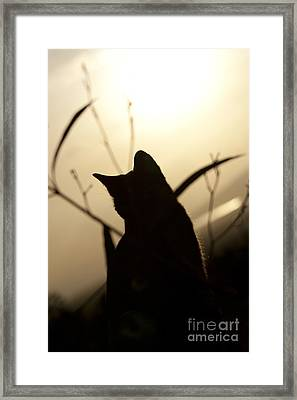 Katarina Framed Print by Sharon Mau