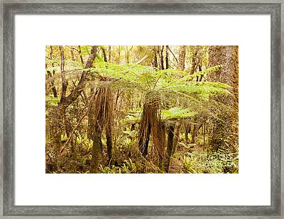 Katote Fern Tree In Nz Sub-tropical Rainforest Framed Print by Stephan Pietzko