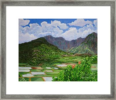 Kauai Taro Fields Framed Print by Chad Berglund