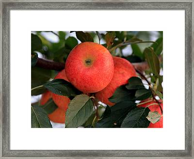 Keep The Doctor Away Framed Print by Karen Wiles