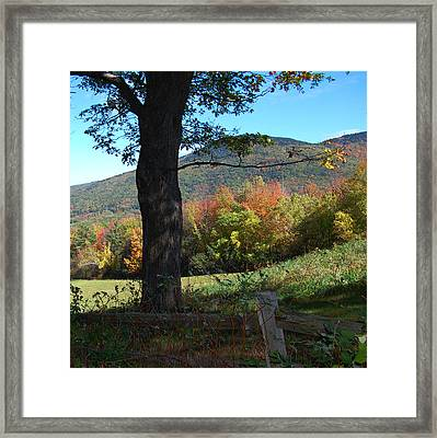 Keeping Watch Framed Print by Mim White