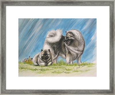 Keeshond With Pup Framed Print by Daniele Trottier