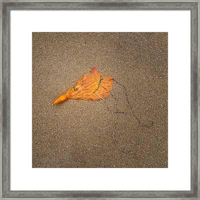 Kelp Framed Print by Joseph Smith