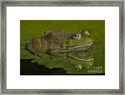 Kermit Framed Print by Susan Candelario