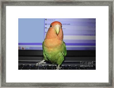 Keyboard Pickle Framed Print by Terri Waters