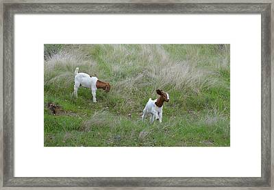 Kids At Play Framed Print by Lynn Bauer