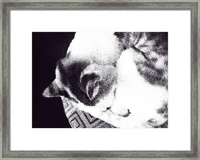 Kiki In Ink Effect Framed Print by Ginny Schmidt