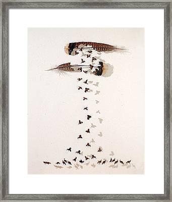 Kim's Turkeys Framed Print by Chris Maynard