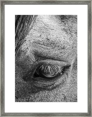 Kind Eye Framed Print by Dianne Arrigoni