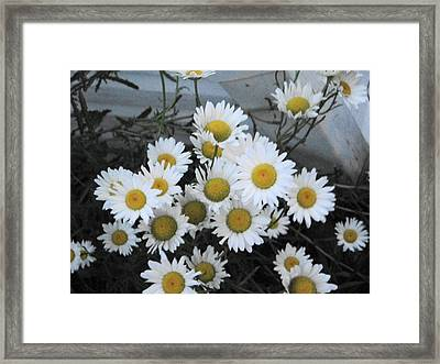 Kindergarten Daisies Framed Print by Suzanne Perry