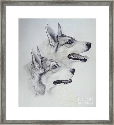 King Dogs Framed Print by Joey Nash