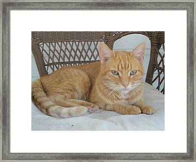 King Ischy Framed Print by Guy Ricketts