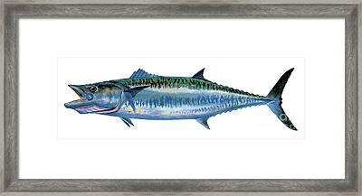 King Mackerel Framed Print by Carey Chen