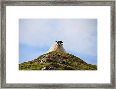 King Of The Hill Framed Print by Bill Cannon