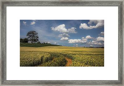 King Of The Hill Framed Print by Chris Fletcher