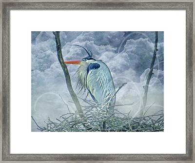 King Of The Sky Framed Print by Georgiana Romanovna