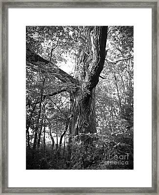 King Of The Timber Bw Framed Print by Garren Zanker