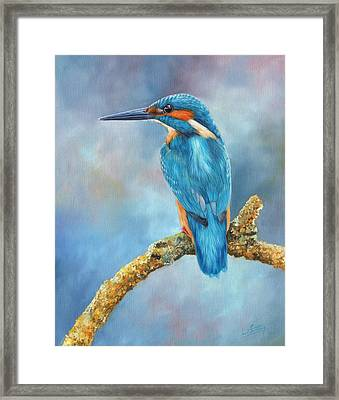 Kingfisher Framed Print by David Stribbling