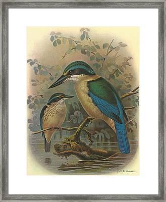 Kingfisher Framed Print by J G Keulemans