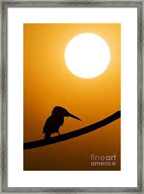 Kingfisher Sunset Silhouette Framed Print by Tim Gainey