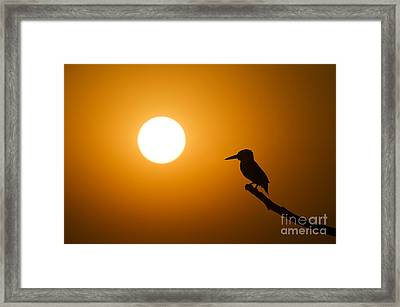Kingfisher Sunset Framed Print by Tim Gainey