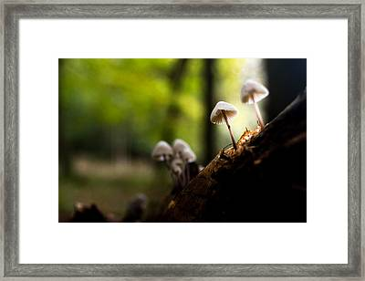 Kings Wood Framed Print by Ian Hufton