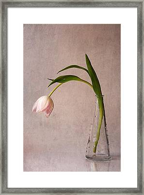 Kiss Of Spring Framed Print by Claudia Moeckel