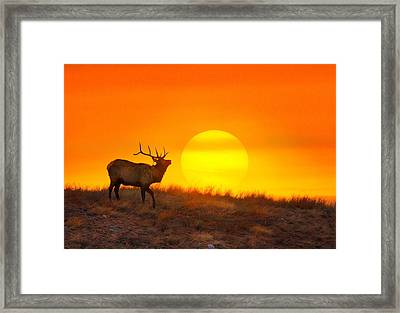 Kiss The Sun Framed Print by Kadek Susanto