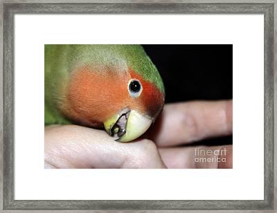 Kisses Pickle Framed Print by Terri Waters