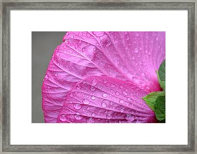 Kissing Pink Framed Print by Michelle Ayn Potter