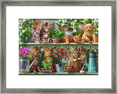 Kitchen Cats Framed Print by Adrian Chesterman