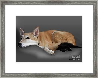 Kitten And Canine Framed Print by Linsey Williams