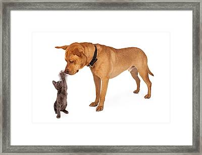 Kitten Batting At Nose Of Large Breed Dog Framed Print by Susan  Schmitz