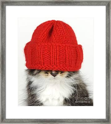 Kitten In A Hat Framed Print by John Daniels