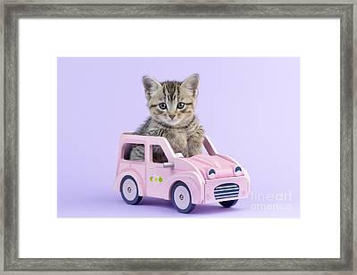 Kitten In Pink Car  Framed Print by Greg Cuddiford