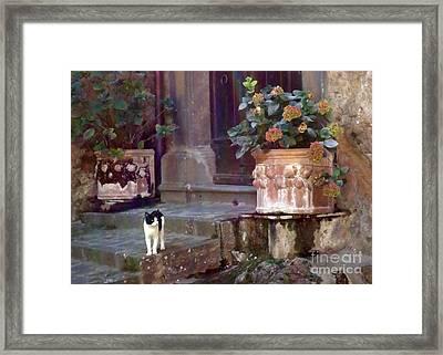 Kitten Italiano Framed Print by Barbie Corbett-Newmin