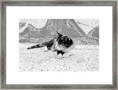 Kitten On A Temple Bench Framed Print by Dean Harte