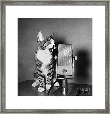 Kitten On The Radio Framed Print by Syd Greenberg