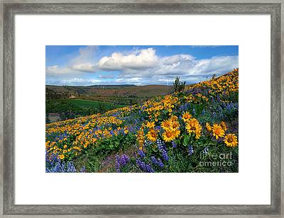 Kittitas Valley Color Explosion Framed Print by Mike  Dawson