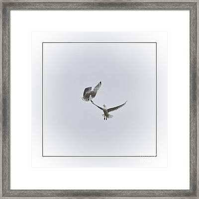 Kittiwakes Framed Print by Heiko Koehrer-Wagner
