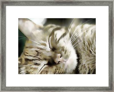 Kitty Dreams Framed Print by Don Bendickson